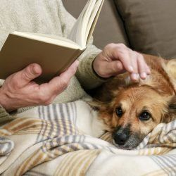 Old man sitting on the sofa with his lovely dog and book. Relax time