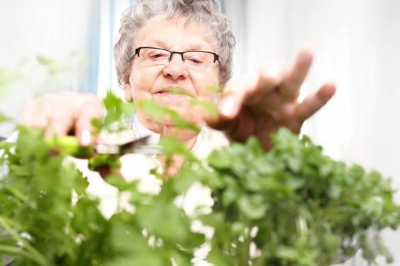 Naturalne wsparcie osób starszych – zioła i ziołolecznictwo