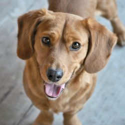 Pies najlepszym przyjacielem człowieka … i zdrowia!
